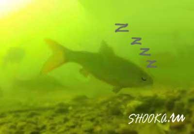 магнитные бури пассивная рыба