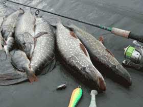 современные способы ловли рыбы